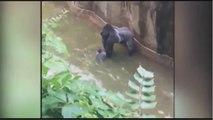 Gorilla grabs child who's fallen into habitat at Cincinnati Zoo Gorilla Grabs Child Whos Fallen int - Playit