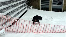 DOGS IN SNOW ★ Dogs Discovers SNOW (New Video) (HD) [Funny Pets]