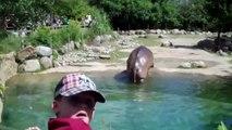 Un hippopotame lâche le plus gros pet du monde