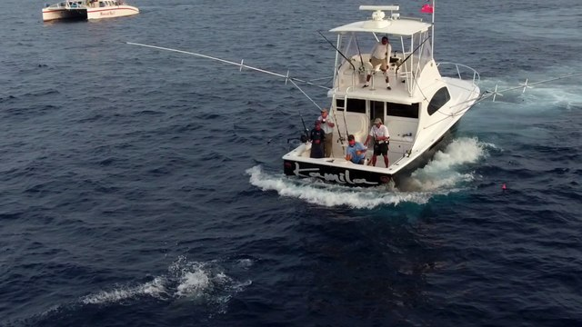 Aerial Footage of Feisty Blue Marlin