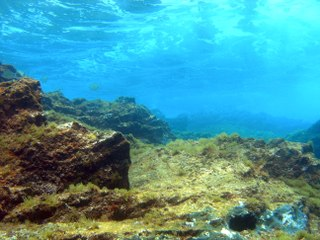 The viruses that rule the oceans