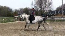 28 Transition gallop-trot