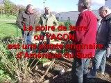 Jardiniers_arrachage poires