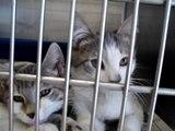 Hornell Animal Shelter #15 - two kittens