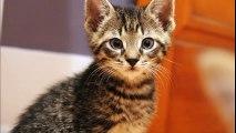 Des chats Des Chats Des Chats