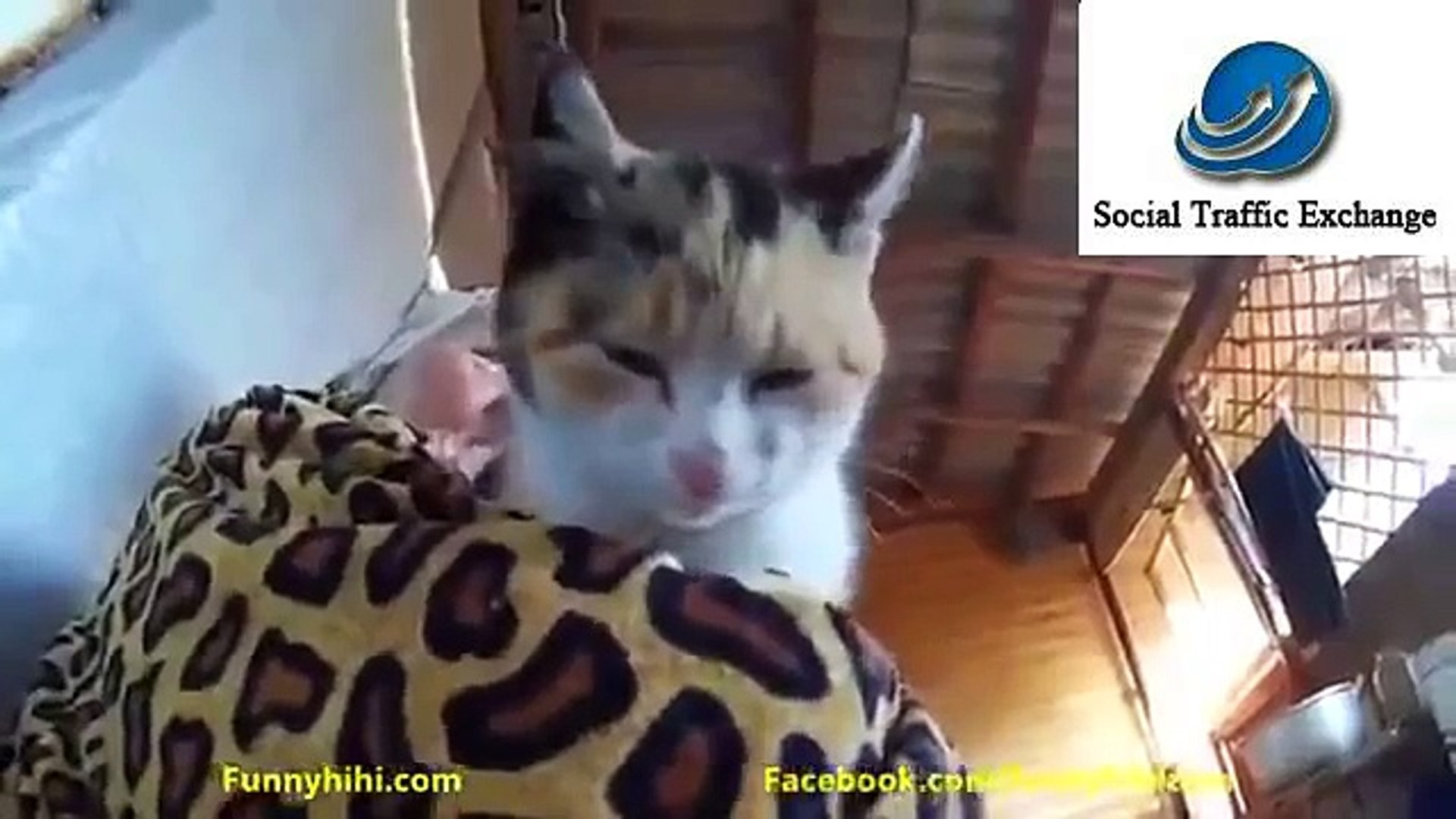 Funny Picture Jokes For Adults Halloween Funny Jokes Bad Funny Videos Download Funny Sport Videos