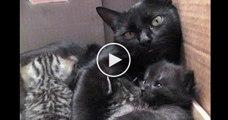 Elle est en pleine discussion avec ses chatons, mais écoutez bien... c'est le son le plus adorable au monde !!