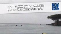 Un requin baleine nage dans les eaux où aura lieu la natation olympique