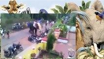Elefante Destrói Carros e Motos Como Brinquedos 27/02/2016