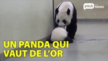 Les Pandas Inutiles
