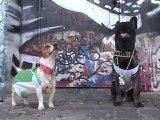 Une vie de chien [ En musique ]
