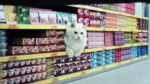 Quand les chats font les courses au supermarché... WTF ?!