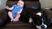 Bébé est en train de faire caca dans son pyjama, mais regardez bien la réaction du chien! Hilarant!
