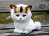 #Cute #Cats #videos of cute #kittens and #funny cat in kitten videos #Compilation(1)