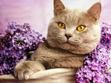 #Cute #Cats #videos of cute #kittens and #funny cat in kitten videos #Compilation(3)