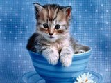 #Cute #Cats #videos of cute #kittens and #funny cat in kitten videos #Compilation(5)