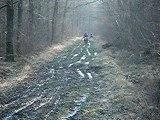 Moto cross dans les bois d'hudi