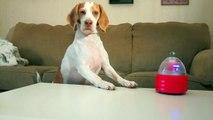 Dog vs. Robot  Cute Dog Maymo