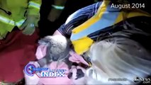 7 Animal Rescue Stories That Will Restore Your Faith in Humanity | ABC News Remix