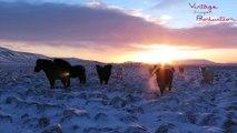 Les volcans, les geysers, les aurores boréales en Islande, c'est magique !