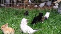 """Moment """"cute"""" : des chatons et lapereaux jouent ensemble dans un enclos"""