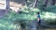 Un homme ivre provoque des lions en entrant dans leur enclos (Inde)