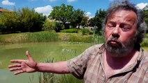 Un couple condamné à combler sa mare pour cause de grenouilles bruyantes