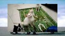 Cats dancing LOL