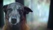 Une campagne de sensibilisation de 30 Millions d'amis contre l'abandon des animaux