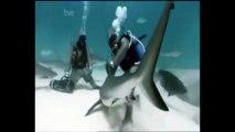mike Rutzen is « Sharkman »