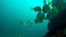 Sea Lion Visit-Diving Cabo San Lucas, Baja Mexico 1/20/2013