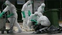 China detecta três casos de humanos infectados por gripe aviária H7N9