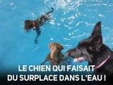 Marrant : ce chien adore l'eau mais déteste nager !