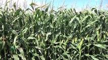 Farm Basics #743-Pesticide Labeling (Air Date 7/1/12)