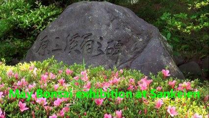 May Bonsai Exhibition at Sankeien - 28 May 2012 - 三溪園(横浜)