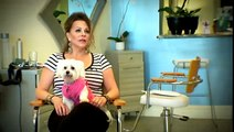 Salon caters to pet owners ... and their pets | Palm Beach County News - WPBF Ch 25