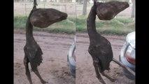 Alien Baby Farm found on Mexico - video dailymotion