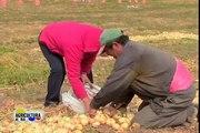 SAC rechaza el Paro Agrario - Agricultura al día, 25 de abril de 2014