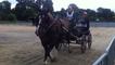 Concours d'utilisation du cheval breton