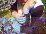 Ozzy joue avec un gendarme (petit insecte) à Redondel