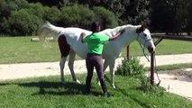 Galop 1 Caresser le cheval