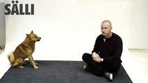 Réactions de chiens à des aboiements par un humain