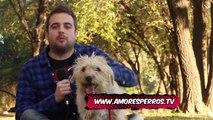 Amores Perros y Otros Amores - Royal Canin y los perros Gerontes.