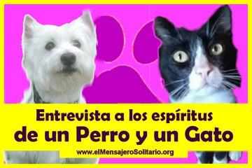 Entrevista a los espiritus de un Perro y un Gato - El Mensajero Solitario