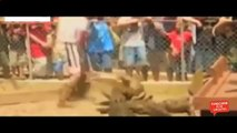 Top Biggest wild animal fights | Most Amazing Wild Animal Attacks #7 | When Animals Fight Back