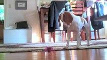 Puppy vs. Robot Inchworm  Cute Dog Maymo