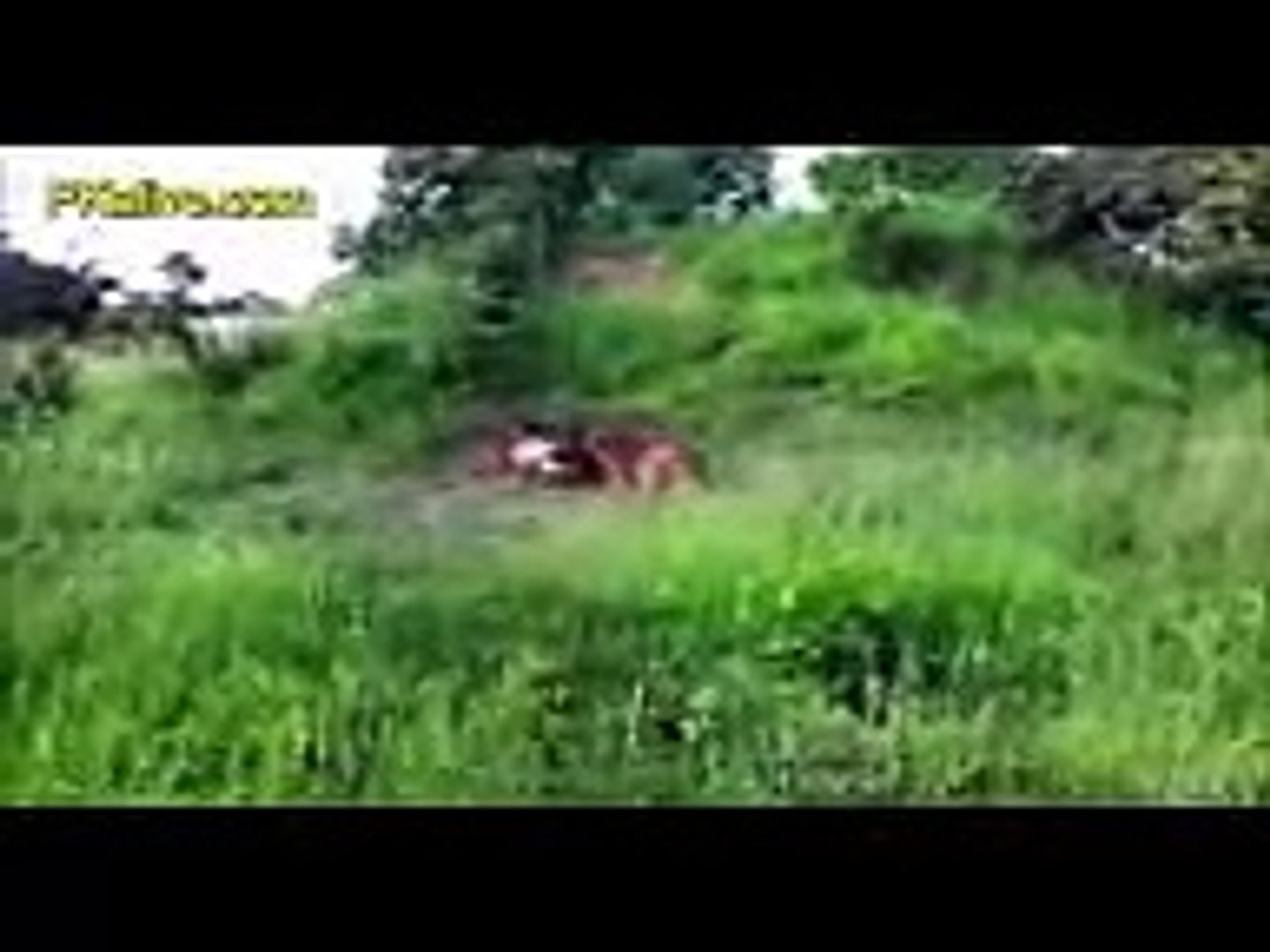 Most Shocking Wild Animal Attacks #35   Biggest Animal Attack Documentary 2016