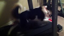 Harvey running at speed 10 on Treadmill in home gym