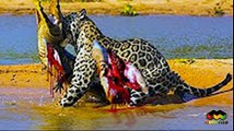 Most Amazing Wild Animal Attacks  Biggest Animal Fights Caught on Camera  CRAZIEST Animal Fights