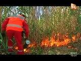 Lutte contre les incendies des voies ferrées (Aigues-Vives)